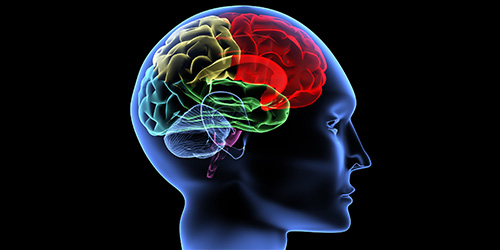 Raportul dintre structurile sistemului nervos central şi meloterapie